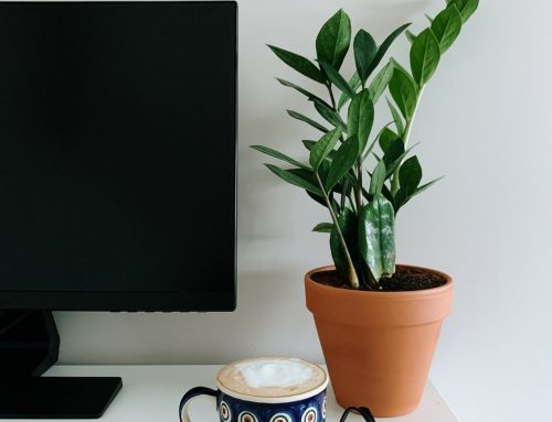 The Best Low Maintenance Plants For Your Office